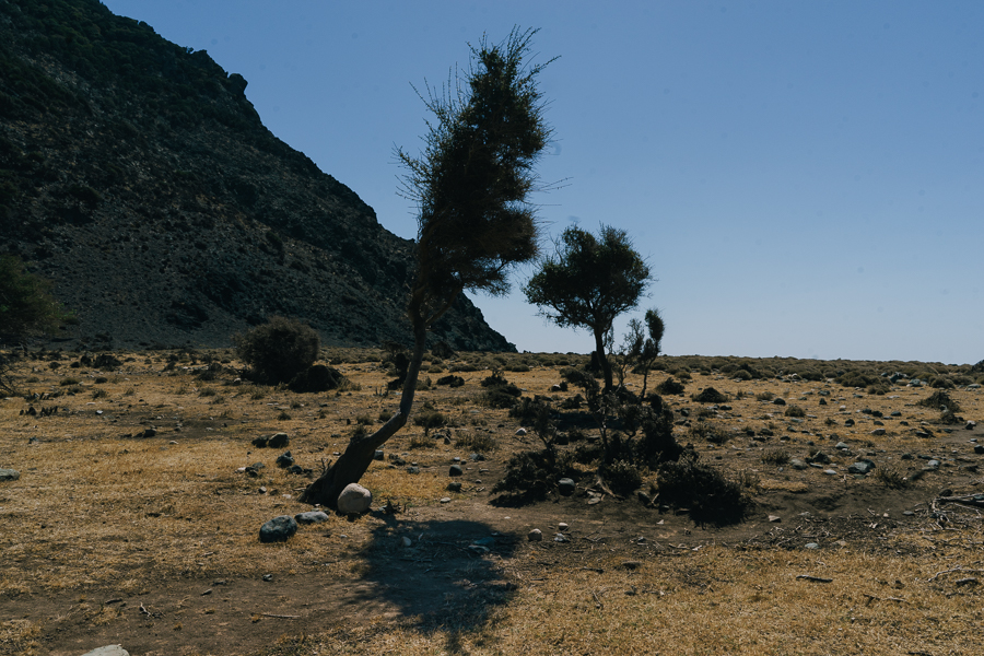 Trees bent by the strong winds near a beach at Samothraki, shot on August 2016, image by Ilias Antoniou.